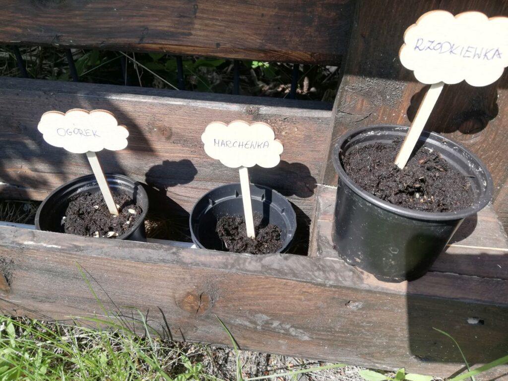 Grupowy ogródek